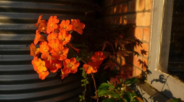 2012_flower