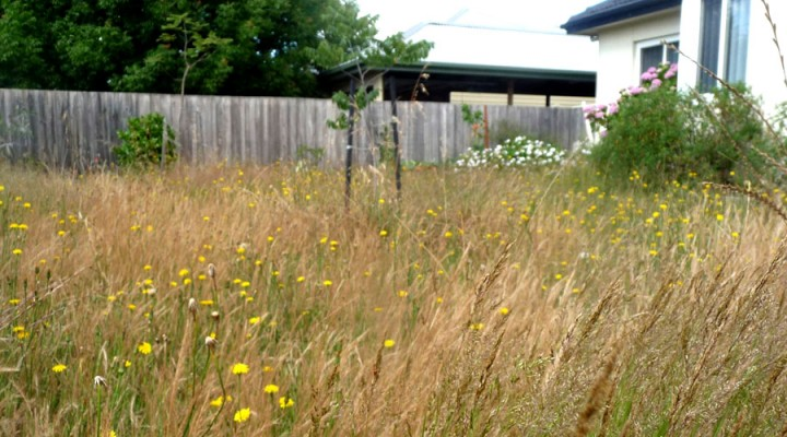 2012_meadow