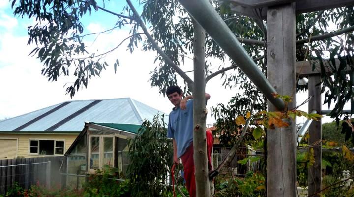 2013_treechop