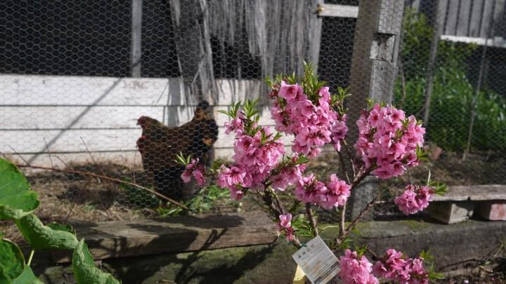 2014 Spring bloom