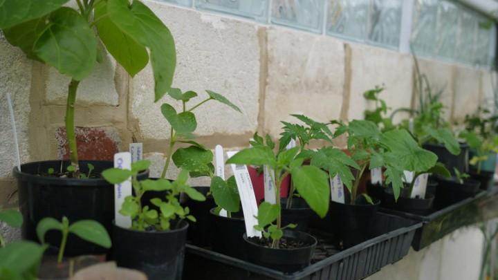 2014 Seedlings